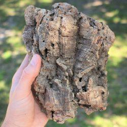 Natural Cork Bark Measuring in Varying Sizes